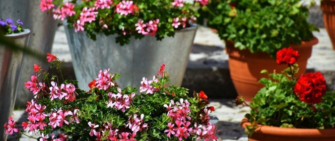 Zinfopl Letnie Kwiaty Na Balkon